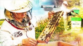 Cámara al Hombro - Apicultura en el Delta del Tigre y desaparición de la especie en Argentina