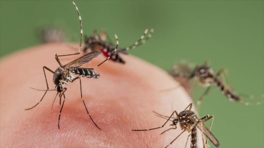 Estudio: algunos somos más apetitosos que otros para mosquitos ...
