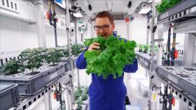 Científicos producen vegetales sin tierra ni luz en la Antártida