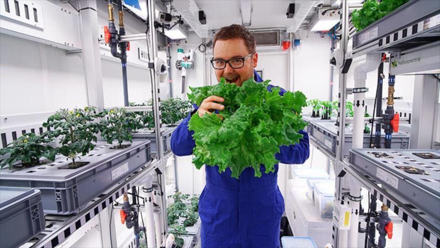 Uno de los científicos en la base alemana Neumayer III posa con los vegetales cultivados.
