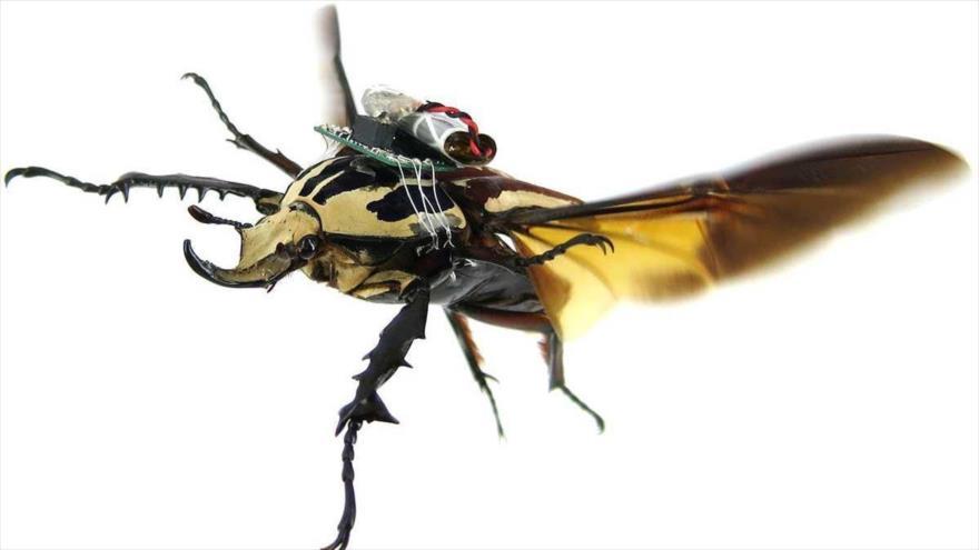 Beetles meet flying cyborgs
