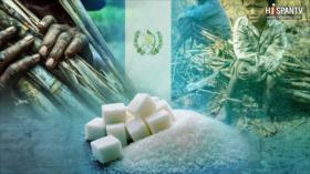 Industria de azúcar no es muy dulce para trabajadores en Guatemala