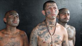 Trump sostiene que miembros de la pandilla MS-13 son 'animales'