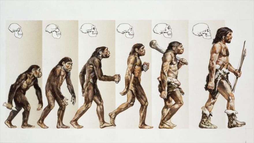 Ilustración que muestra la evolución del ser humano según la teoría Darwin.