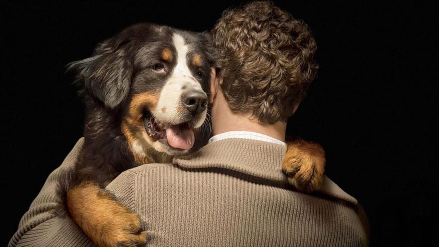 Los animales transmitieron el 75 % de enfermedades que afectaron a los humanos.