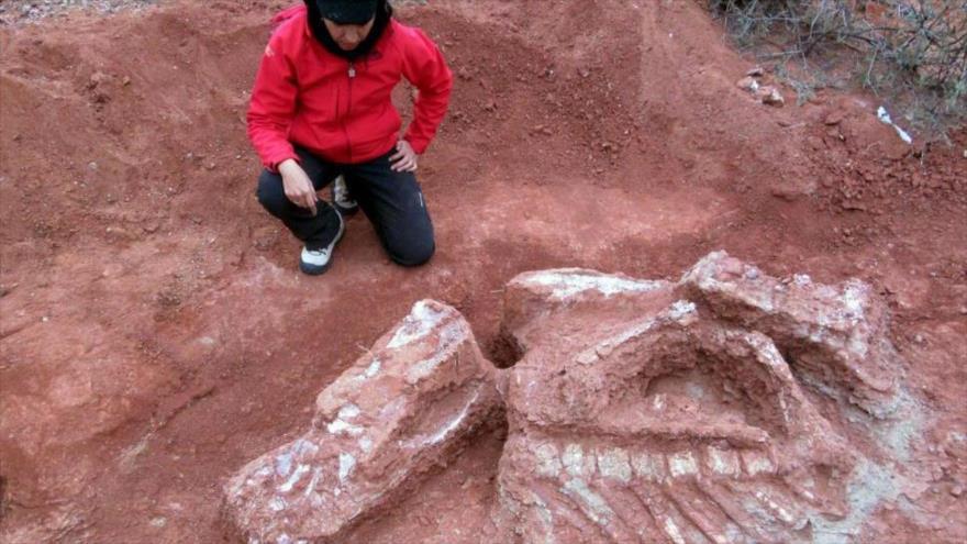 Investigadores encontraron restos de una especie de dinosaurio, en el yacimiento de Balde de Leyes, provincia de San Juan, Argentina.