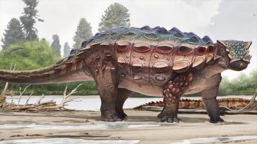 El dinosaurio Akainacephalus johnsoni, que vivió hace 76 millones de años, es parte de la familia Ankylosaurids.