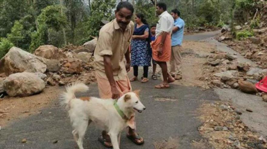 Un perro salva a su familia de morir en un derrumbe en La India   HISPANTV