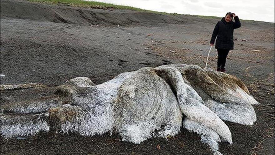 Un misterioso monstruo aparece en la playa de Rusia