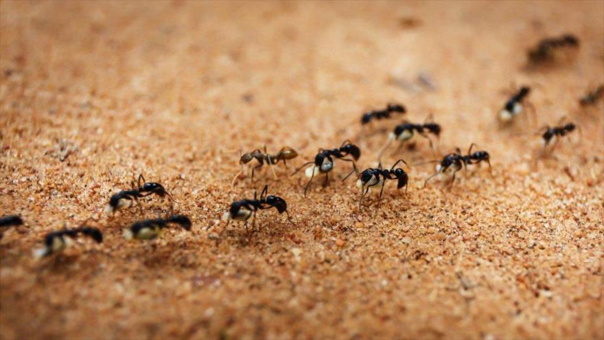 En el comportamiento de las hormigas podemos encontrar la forma de reducir atascos.