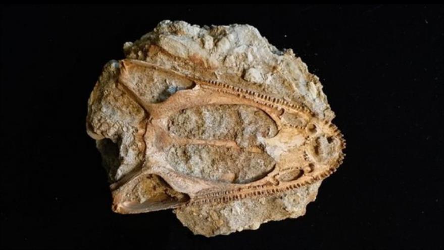 Descubren en Rusia cráneo de un extraño animal prehistórico | HISPANTV