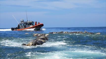 Hallan muertas a 300 tortugas marinas atrapadas en redes de atún