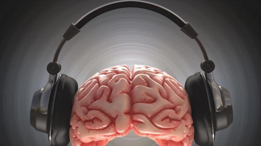 La corteza auditiva del cerebro puede cancelar selectivamente los sonidos que aprendió que surgirán de un movimiento particular.