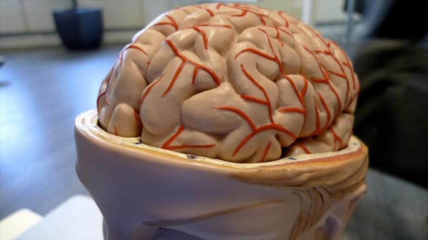 Trabajar tras una lesión cerebral acelera la recuperación.