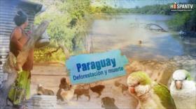 Esta es mi tierra - Paraguay: Deforestación