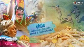 Esta es mi tierra - Chile: ¿Los mapuches son terroristas?