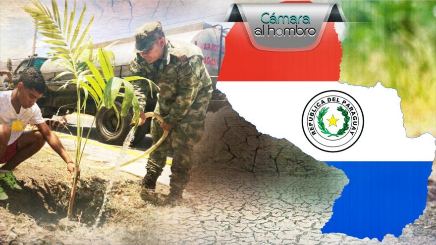 Cámara al Hombro: Amenazas para la conservación de árboles nativos de Paraguay