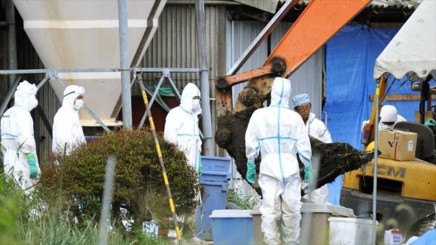 Informe: Pentágono provoca epidemia de peste porcina en Rusia y China