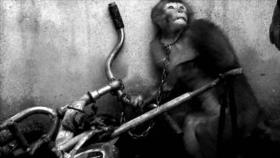 Fotos que sacuden al mundo: Entrenamiento de mono en China