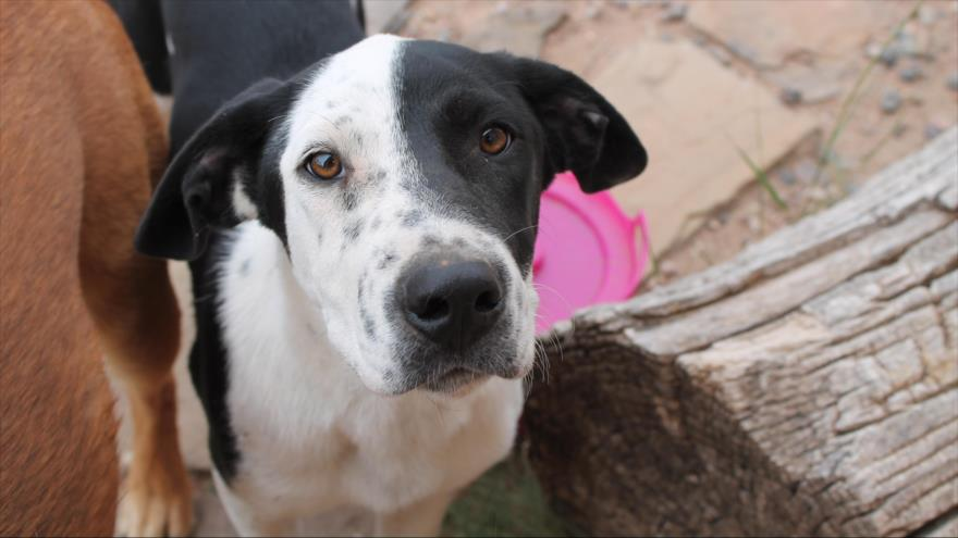 Vídeo: Un perro perdido tres años llora al reunirse con su dueño