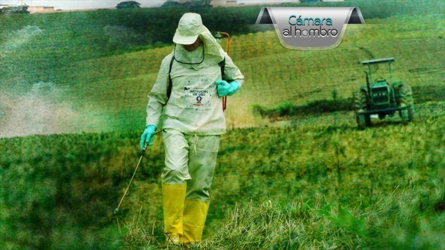 Cámara al Hombro: Alto consumo de agrotóxico en Brasil