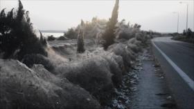 Vídeo: Telarañas hacen el lago greco espeluznante