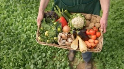 Estudio: Comer alimentos orgánicos reduce 25% el riesgo de cáncer