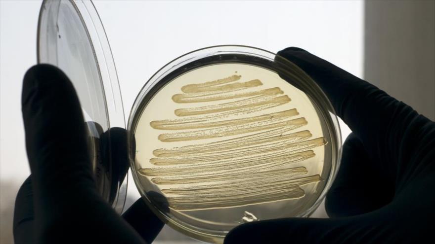 Las bacterias resistentes a los antibióticos fueron responsables de la muerte de 33 000 personas en la Unión Europea (UE) en 2015.