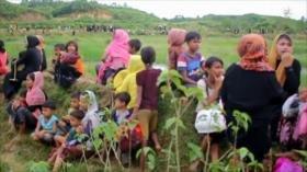 Acuerdo del Brexit. Alto el fuego en Gaza. Genocidio contra Rohingya