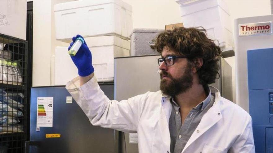 Crean en Chile 'tejido verde' capaz de regenerar la piel humana | HISPANTV