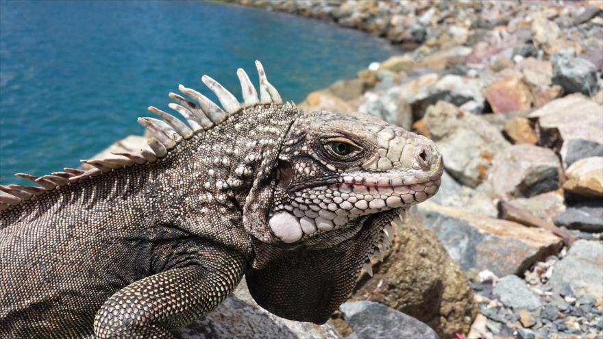 Hallan en EEUU huellas de un extraño reptil de 310 millones de edad.