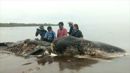 Hallan en Indonesia un cachalote muerto con plásticos en su estómago