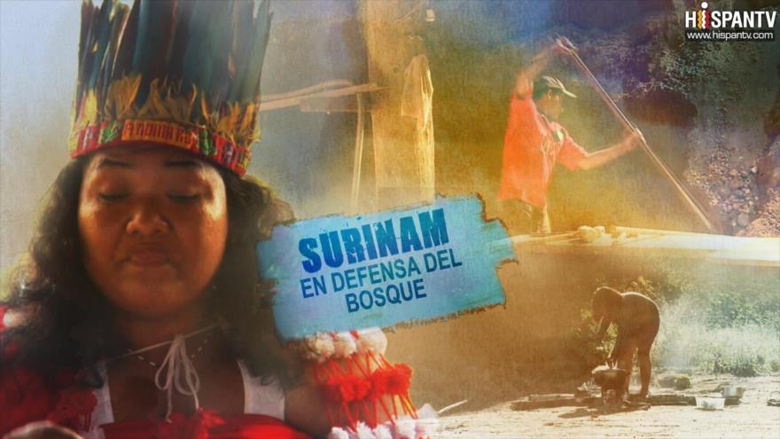 Esta es mi tierra: Surinam, en defensa del bosque