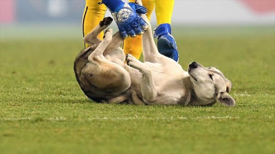 Un perro se cuela en un partido de fútbol argentino y evita un gol