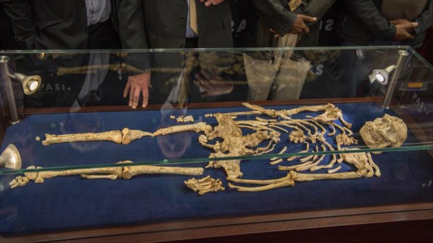 Hallan antepasado humano de hace 3,6 millones de años en Sudáfrica | HISPANTV