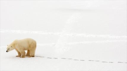 El Ártico registra en 2018 su segundo año más cálido desde 1900