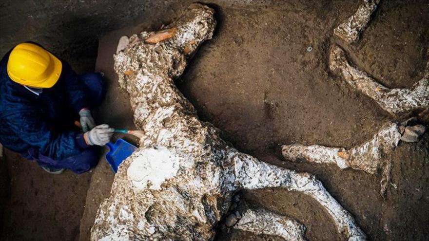 Perfecto estado de un caballo petrificado sorprende a arqueólogos