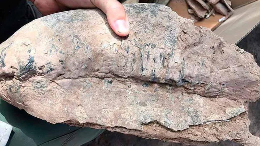Hallan en Argentina fósil de mamífero extinguido hace 8000 años