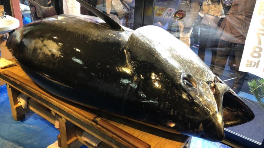El gigantesco atún vendido en la tradicional primera subasta anual, celebrada en Tokio, la capital de Japón.