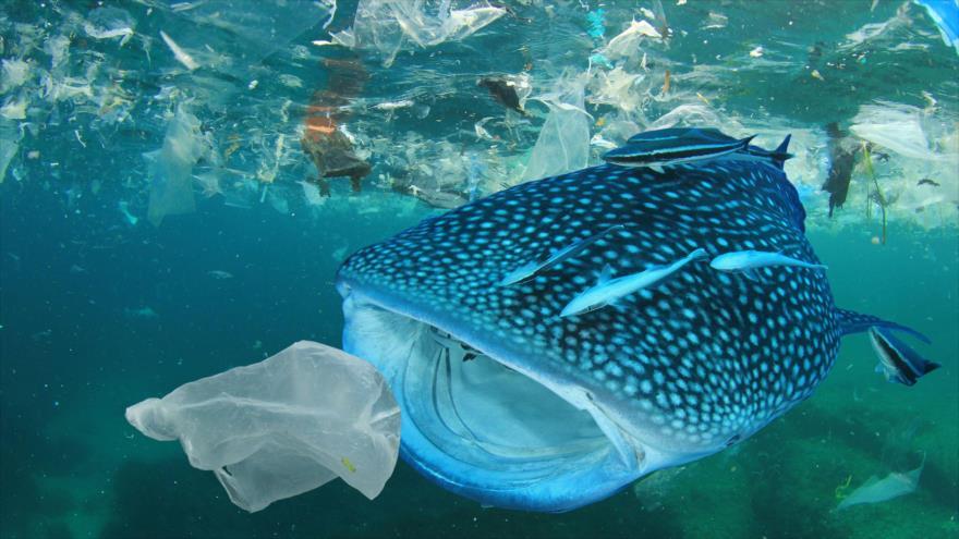 Las criaturas que viven en los lugares más profundos del océano consumen plástico.