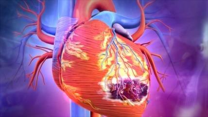 El hombre, de sangre caliente, ya no puede regenerar el corazón