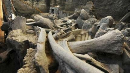 Arqueólogos encuentran restos óseos de mamuts en Tultepec (México)