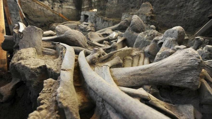 El Instituto Nacional de Antropología e Historia (INAH) anuncia el hallazgo de los restos óseos de Mamuts en Tultepec en México, 14 de marzo de 2018.