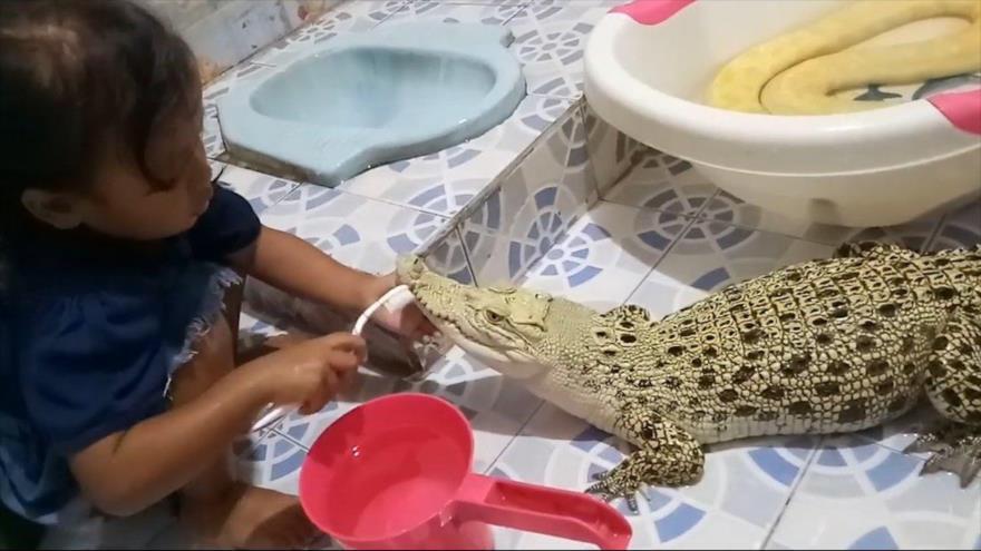 Vídeo viral: Niña maquilla a cocodrilo y juega con una pitón | HISPANTV
