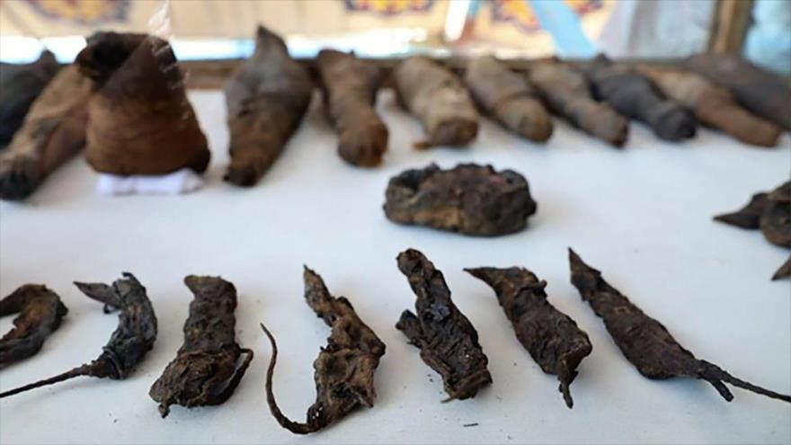 Ratones momificados hallados en una antigua tumba en Egipto. (Foto: Ministerio de Antigüedades de Egipto)