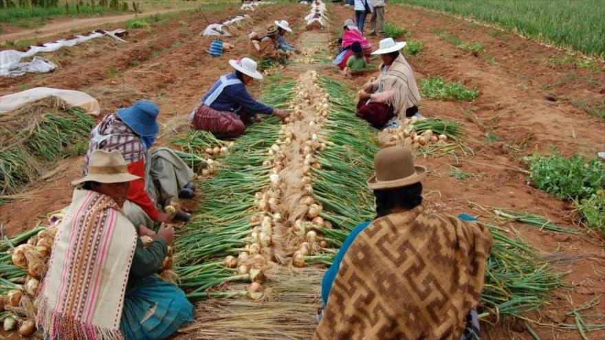 FMI: Bolivia tendrá mayor crecimiento económico regional en 2019 | HISPANTV