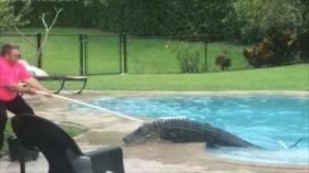 Vídeo: Familia halla un enorme cocodrilo en la piscina de su casa