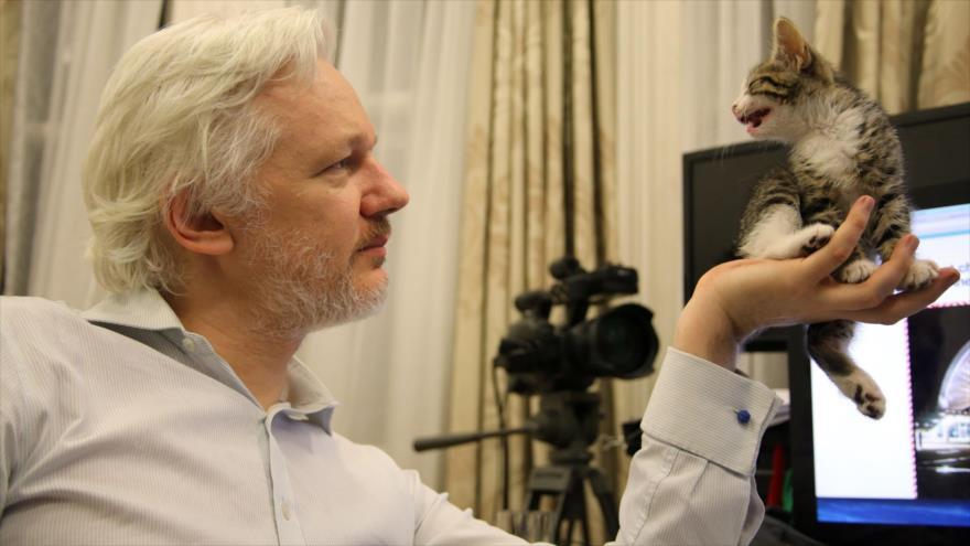 WikiLeaks niega acusación de Ecuador sobre 'gato espía' de Assange | HISPANTV