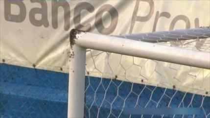 Vídeo: Invasión de abejas suspende partido de fútbol en Argentina