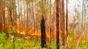 Fuego afecta zona protegida de República Dominicana